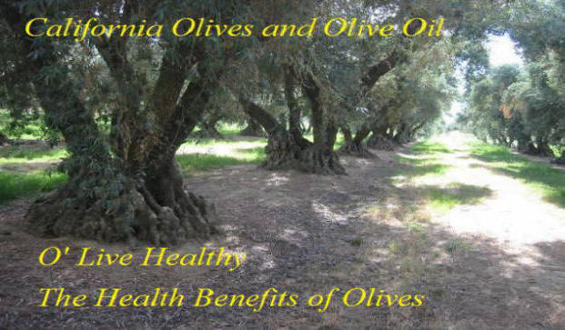Large Olive Grove